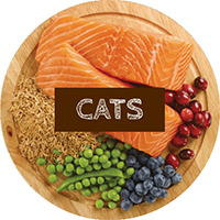 cats meal